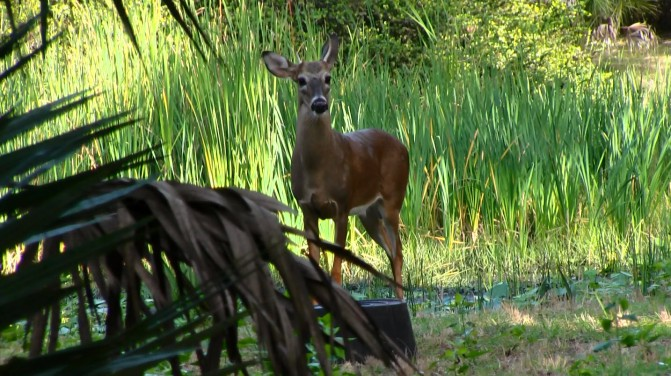Tips on coexisting with our parks' animals