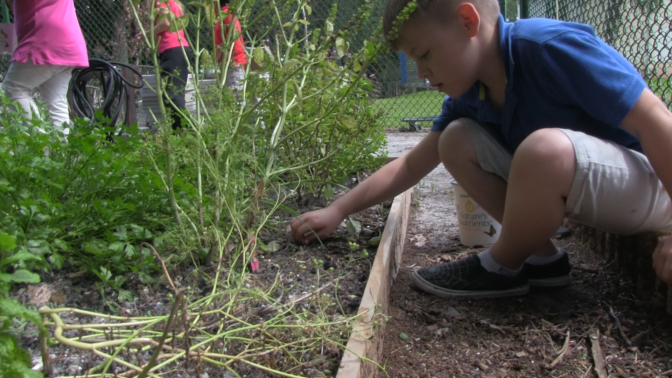 After School kids help plant garden at West Jupiter Recreation Center