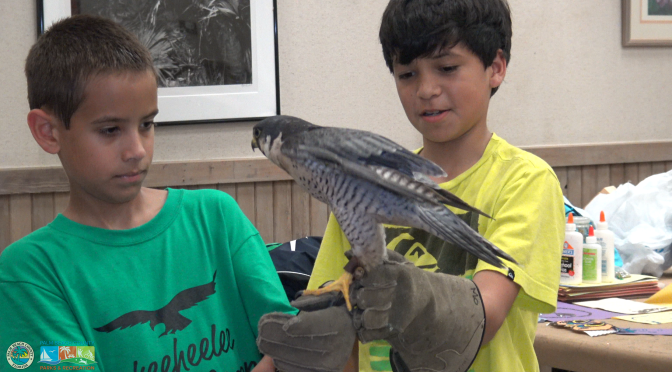 Okeeheelee Nature Center Welcomes Specialty Camps, Field Trips