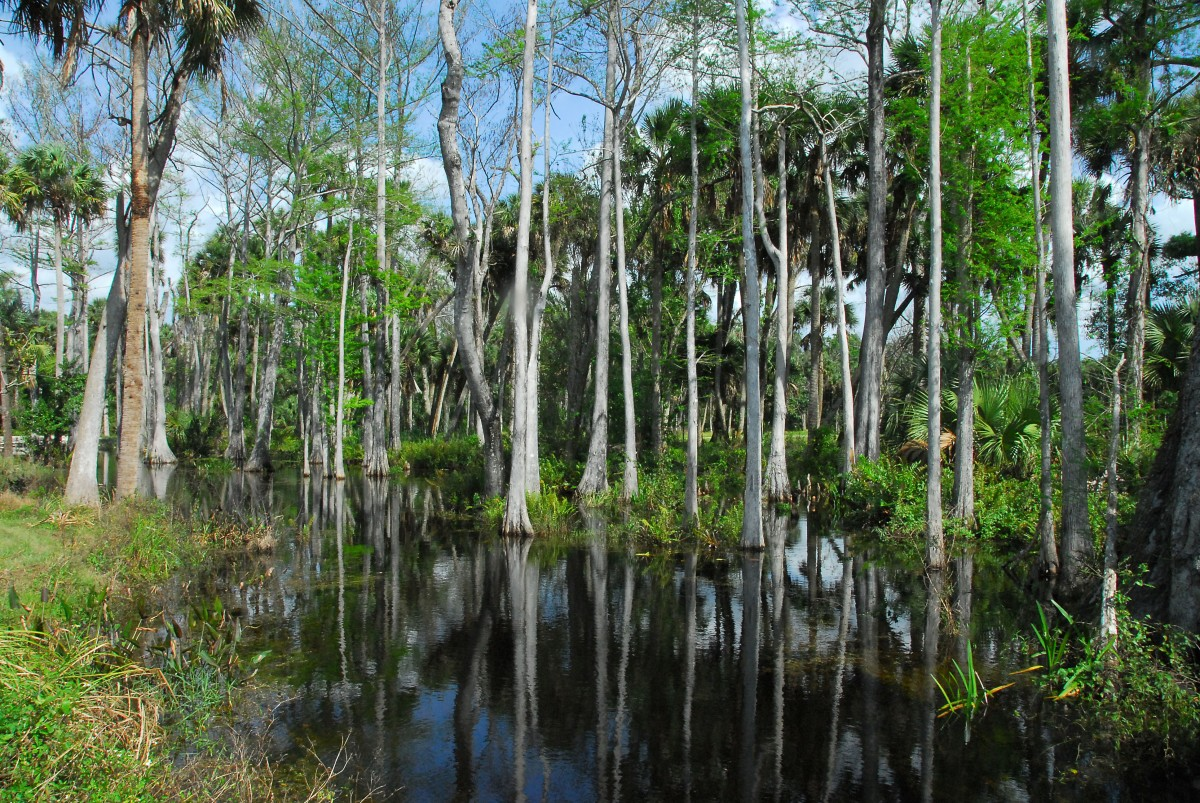 Palm Beach County Parks offer variety of cultural, historical ...
