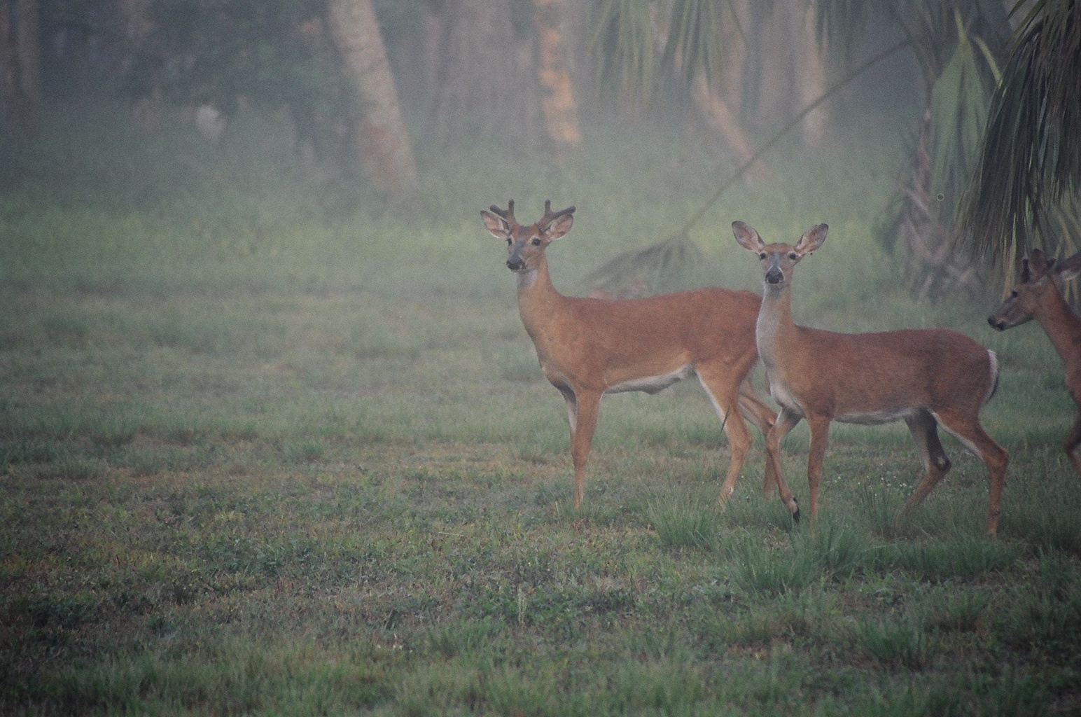 Deer in Riverbend Park.JPG