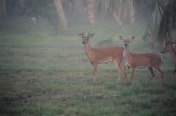 Deer in Riverbend Park.JPG