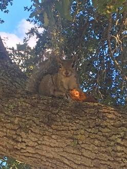 jpp_squirrel