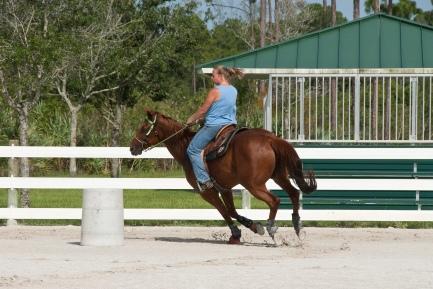 Jim Brandon Equestrian_1.jpg